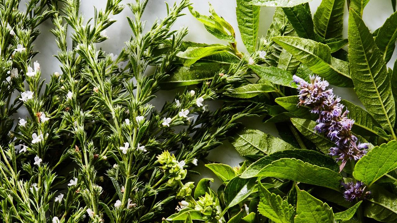 54-Herbs_Dark.jpg